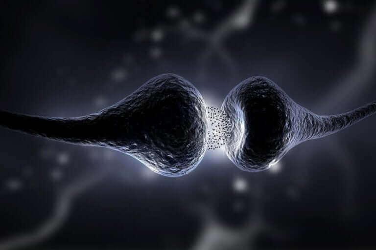 Sinapslar arası bağlantının gerçekleşmesi