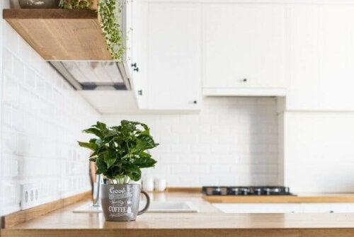 Mutfağınızda Nasıl Taze Bitkiler Büyütürsünüz