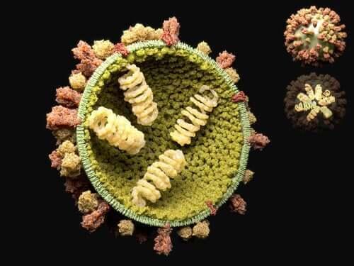 Virüslerin Yeniden Üreme Döngüsü
