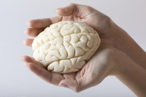 Ellerinde bir beyin örneği tutan bir kişi.