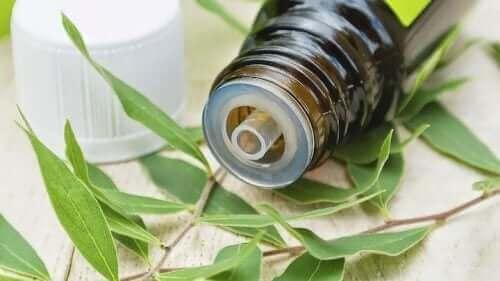 çay ağacı yağı ile sinüzit tedavisi