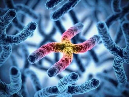 Kromozomları gösteren bir resim.