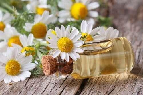 Küçük bir şişe papatya yağı ve papatya çiçekleri.