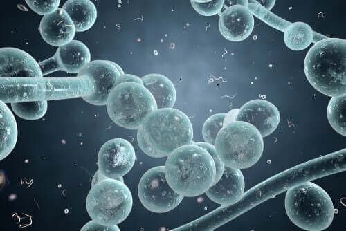 Candida albicans molekülleri.