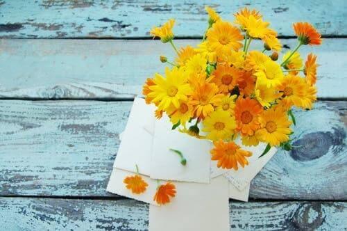 Kadife çiçeği.
