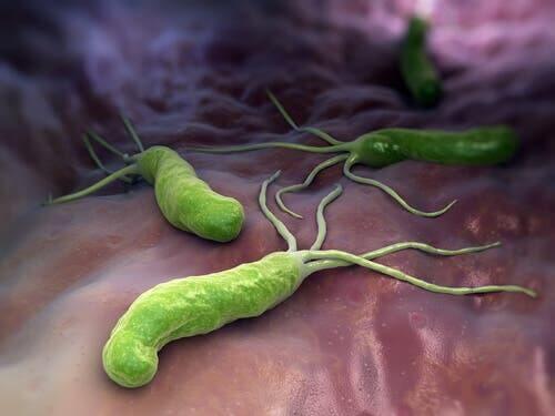 Bir sisteme girmiş bakteriler.