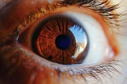 Göz Kendisini Nasıl Temizler, Öğrenin