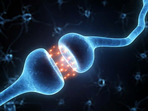 iletişim halindeki iki nöron
