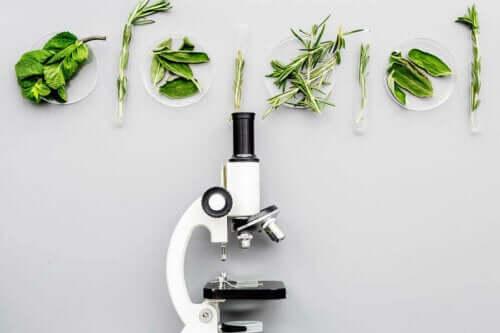 Mikroskop altında incelenmek üzere olan yeşil sebzeler.