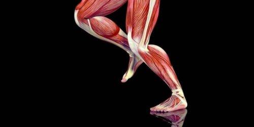 bacak kasları iç görünüm