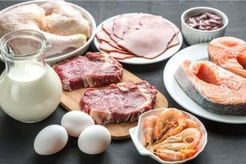farklı protein kaynakları