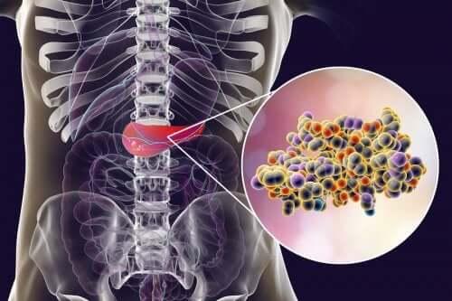 vücudumuzdaki pankreas