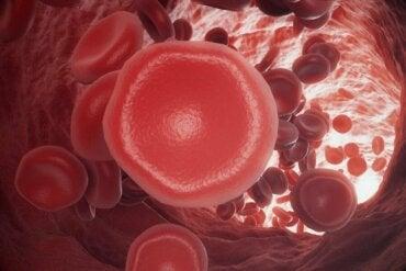 Pıhtılaşma Problemleri: Kan Nasıl Pıhtılaşır?