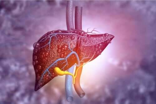 Karaciğer çizimi