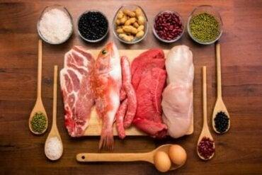 Proteinler: Vücuttaki Fonksiyonlarıyla İlgili Her Şey
