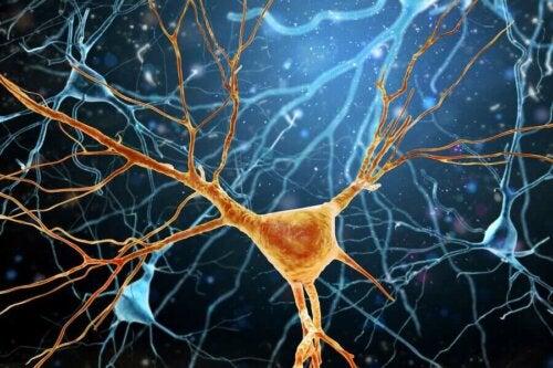 nörogenez oluşumu