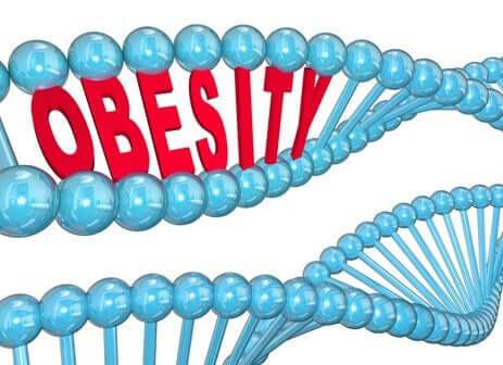 Bilime Göre Obezite Geni