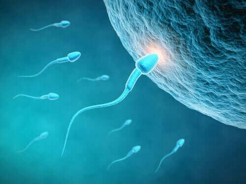 Sperm Kalitesi Bir Erkeğin Beslenme Düzeninden Nasıl Etkilenir?