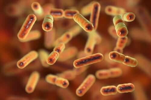 Bağırsak mikrobiyotası hasarına dair bir örnek.