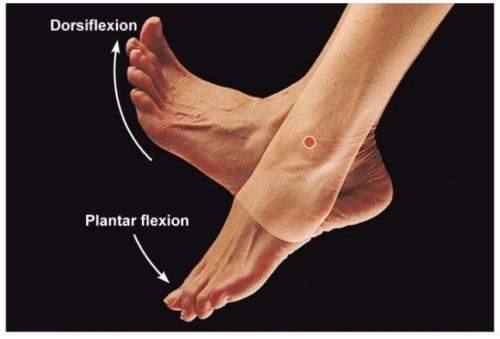Dorsifleksiyon ve plantar fleksiyon hareketlerini gösteren bir resim.