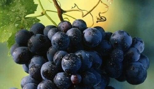 Bir salkım kara üzüm.