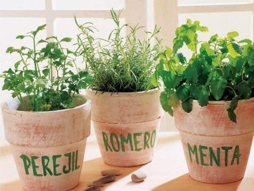 Üç farklı aromatik bitki saksısı.