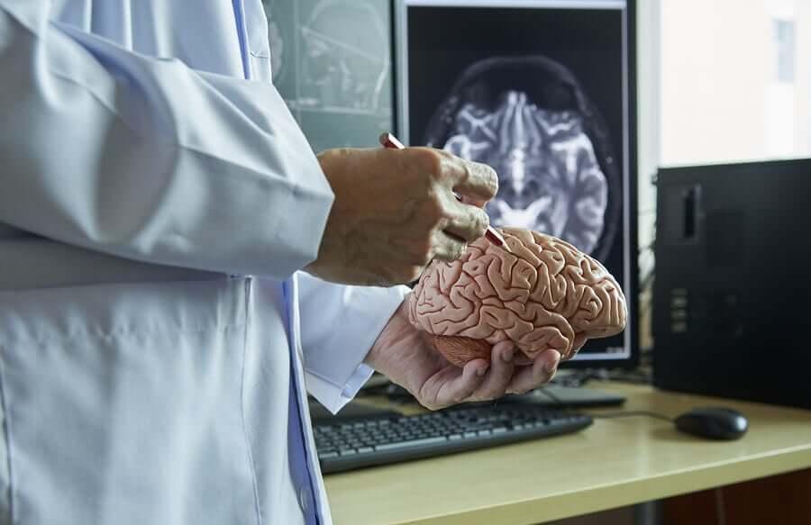 beyni inceleyen bir doktor