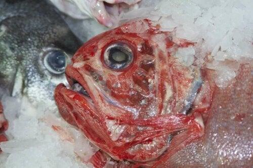 Cıva içeren çeşitli balık türleri.