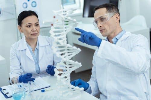 DNA üzerinde çalışan bilim insanları.