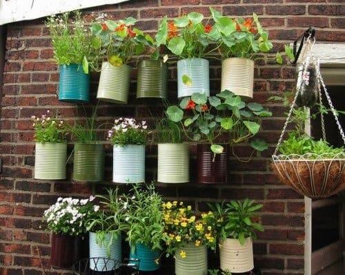 Duvara asılmış saksılardaki mutfak bitkileri.