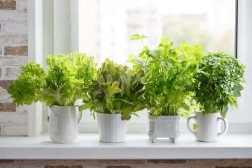 Farklı Mutfak Bitkileri Nasıl Ekilir