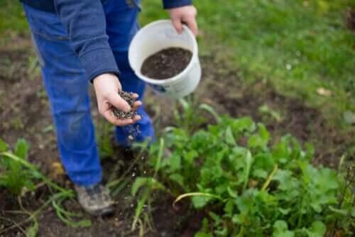 tohum ekimi
