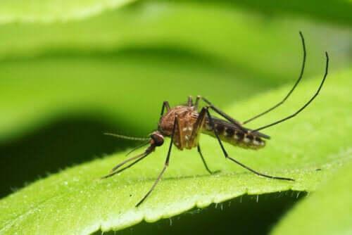 Sivrisinek Kaynaklı Başlıca Hastalıklar