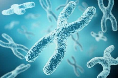 yüzen kromozomlar