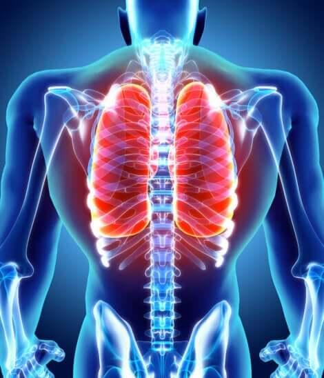 Akciğer ve insan vücudu görseli