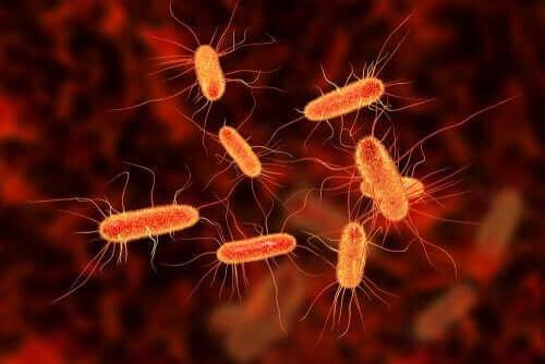 Bir bakteriyel enfeksiyonu temsil eden bir görsel.