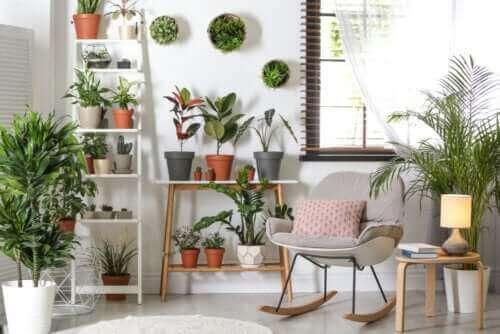 Çok Fazla Bakım Gerektirmeyen Dayanıklı Bitkiler