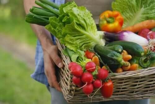 Bir adam elinde çeşitli sebzelerle dolu bir sepet tutuyor