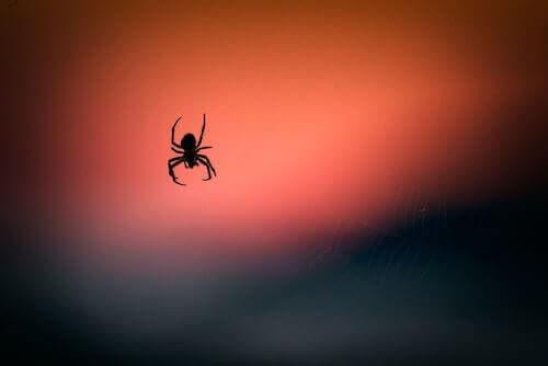 Örümcek Zehri: Beyin Hasarını Azaltmaya Etkisi