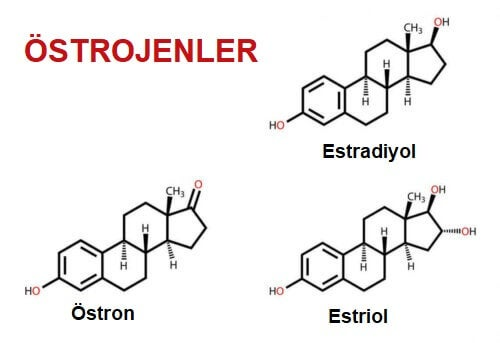 östrojenler