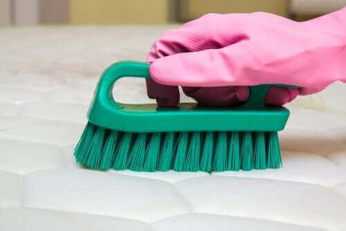 Eldiven takmış bir şekilde temizlik yapan bir kişi.