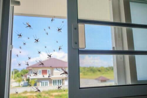 Sivrisineklere Karşı Doğal Bir Çare Olarak Fesleğen