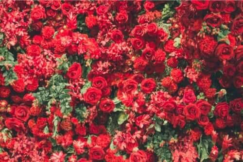 Çekici 6 Kırmızı Bitki