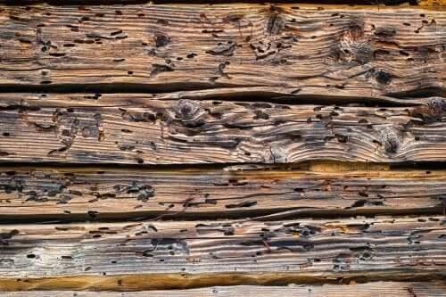 tahta kurdu istilası altında bir ahşap duvar