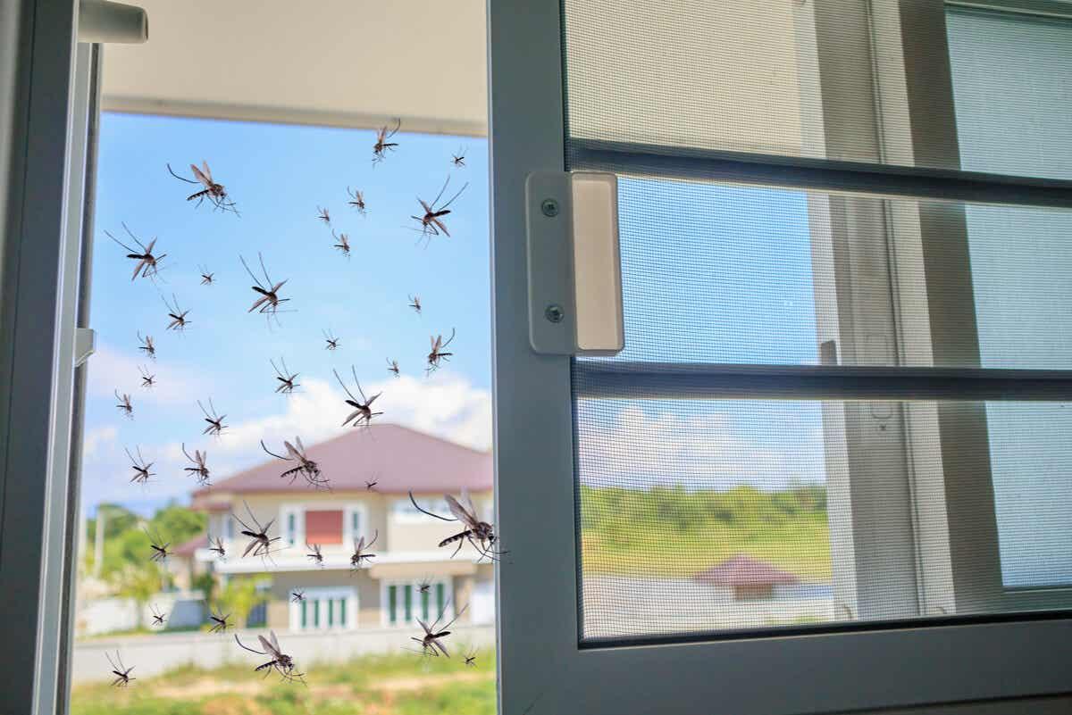 sivrisinekleri evden uzak tutmak