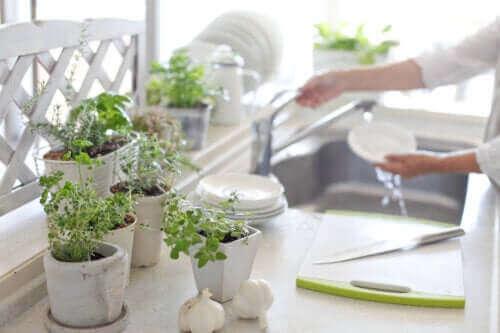 Mutfakta Bitki Olmasının 5 Faydası