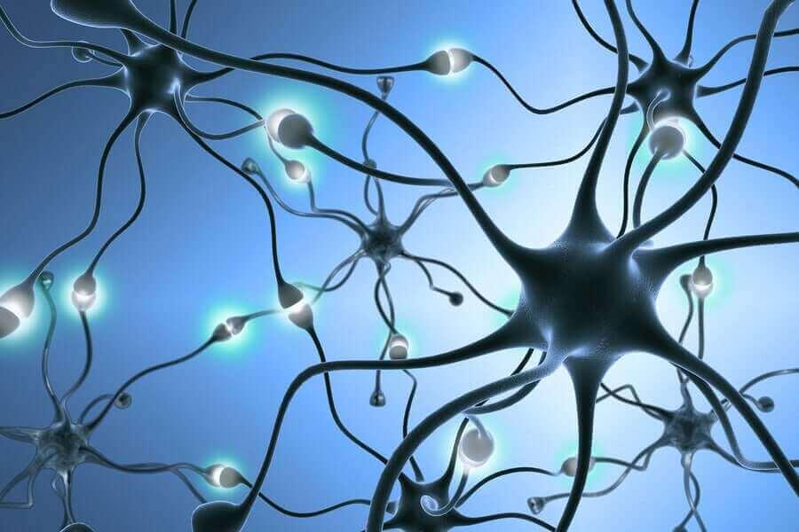 bir nöron ağı